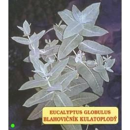 /ZB/ EUCALYPTUS globulus 500 semen