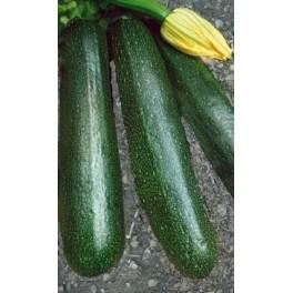 TYKEV - CUKETA Startgreen (F1) (Cucurbita pepo L.) 5 semen