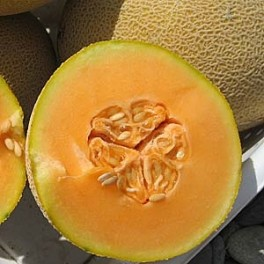 MELOUN Athena (F1) Cantaloupe/ Muskmelon (Cucumis melo) 5 semen