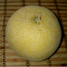 MELOUN cukrový Galia (Cucumis melo) 10 semen