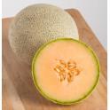 MELOUN EarliChamp (F1) Cantaloupe/Muskmelon (Cucumis melo)  5 semen