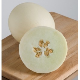MELOUN Honey Pearl (F1) Honeydew (Cucumis melo)  5 semen