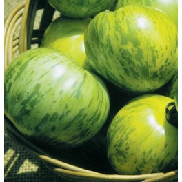 BIO RAJČE Green Zebra (Solanum lycopersicum) 15 semen