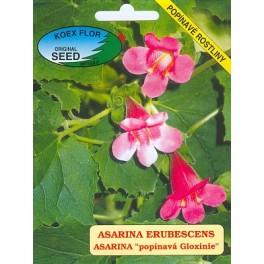 "/BS/ ASARINA erubescens ""Popínavá Gloxinie"" 50 semen"