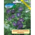 /BS/ ASARINA scandens Modrofialová 50 semen