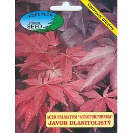 /BS/ ACER palmatum Atropurpureum 5 semen