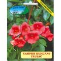 /BS/ CAMPSIS radicans 30 semen