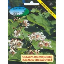 /BS/ CATALPA bignonioides 30 semen