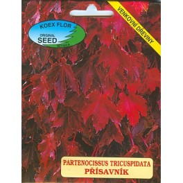 /BS/ PARTENOCISSUS tricuspidata 15 semen