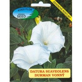 /BS/ DATURA suaveolens 15 semen